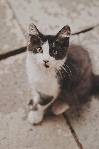 原來在人工智慧眼中,貓竟然是這樣型態的生物嗎?合成出來的圖像顛覆眾人想像!