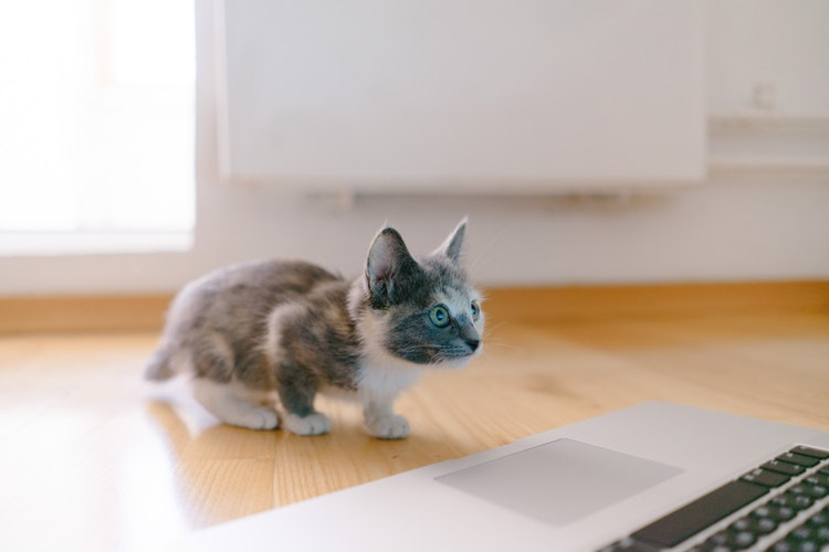 AI人工智慧的強大:流浪貓庇護所