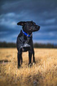 給軍犬設計的AR裝備可遠端下指令,更方便!