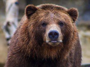 熊熊也有專門的人工智慧臉部辨識!動保人員與愛熊成痴的工程師夫妻共同開發!
